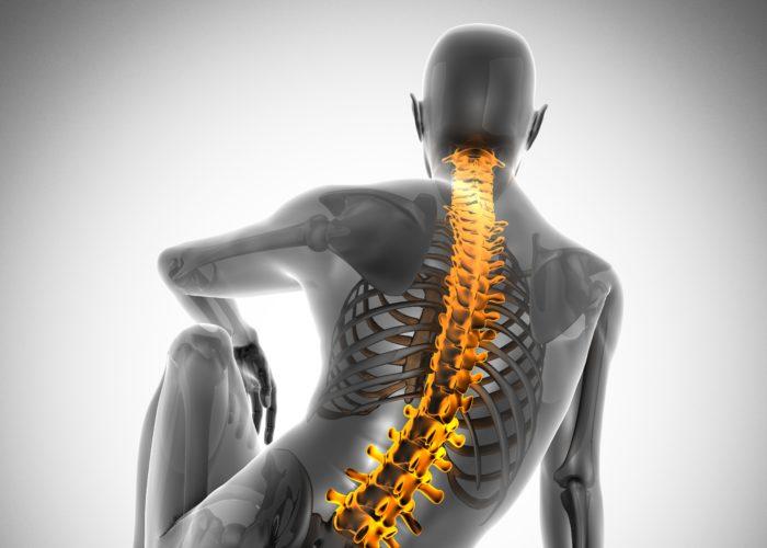human bones radiography scan. x-ray  image